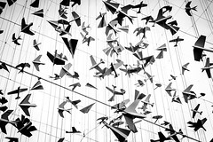 model-planes (mcook1517) Tags: planes blackandwhite monochrome artwork suspended flight