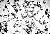 model-planes (mcook1517) Tags: planes blackandwhite monochrome artwork suspended flight