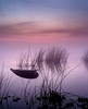 Watery Grave (mikeSF_) Tags: california byrontract knightsen discoverybay orwood middleriver river delta water shore bank riverbank sunrise fog foggy pentax 645 645z old oldriver byron www mike oria wwwmikeoriacom