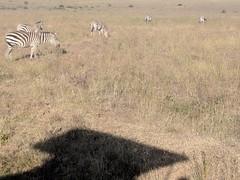 2017-12-28 17.16.22 (dcwpugh) Tags: travel nairobi kenya safari nairobinationalpark