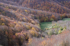 Da San Benedetto in Alpe a Castagno d'Andrea (LLauraNLS) Tags: appennino toscana tuscany emiliaromagna landscape paesaggi mountains montagne hiking trekking trekkingdelleforestesacre sentierodelleforestesacre foresta forest forestecasentinesi foliage nature italia italy dogtrekking wood