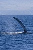 Beautiful day to end 2017 - with a whale watch (ArneKaiser) Tags: hawaii humpbackwhales maui megapteranovaeangliae pacificocean pacificwhalefoundation whale whales whalewatching
