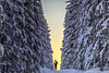 The Gate (goforphoto) Tags: skiing sweden snow trees north