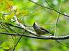 GC289187 (unitcell) Tags: 台灣 桃園 復興 桃源仙谷 taiwan bird