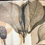 Endpapers: Fraser Magnolia Leaf & Pod thumbnail