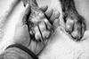 5/365 (Garen M.) Tags: buttercup paws home nikond850 cat dog chicklet nikkor2470mmf28 jerry ella