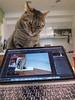 All Photos-3256 (lazybonessss) Tags: kitten iphone8 cat nana