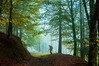 EL SETERO 3 (juan luis olaeta) Tags: paisajes landscape contraluz colores fog laiñoa color naturaleza nature basquecountry euskalherria