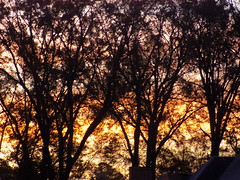 Sunrise. (dccradio) Tags: lumberton nc northcarolina robesoncounty outside outdoors nature natural plant branches tree trees treebranches treelimb treelimbs colorful colorfulsky morning morningsky goodmorning landscape beauty beautiful pretty nikon coolpix l340 bridgecamera silhouette