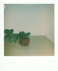 Rose (Robkin7) Tags: polaroid vintage poster impossible time photo pic picoftheday rose flower red green sun flash