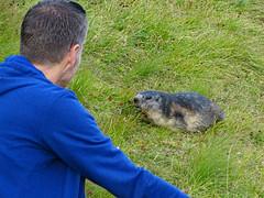 Austria '17 (faun070) Tags: kaiserfranzjosefhöhe murmeltier wildlife austria grossglocknerstrasse alpinemarmot jhk tourist dutchguy
