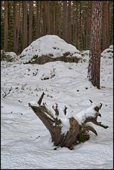Stubbe och sten (Jonas Thomén) Tags: stubbe stump sten rock stone skog forest mossa moss träd trees landscape landskap lavar lichen vinter winter snö snow tree wood