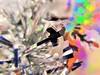 """Festive Christmas Sparkles"" (seanwalsh4) Tags: festivesparkles bokeh christmas sparkles glittery shiny festive decorations blur haze memberschoice seanwalsh memberschoicebokeh macromondays 25122017 merrychristmas celebrate party bristol canon190ixus"