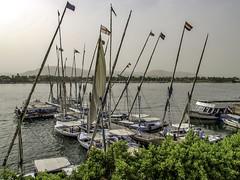 The Nile at Luxor (Tony Tomlin) Tags: egypt dows sailboats nile river luxor