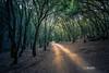 Marganai_0044_20151219 (ivan.sgualdini) Tags: 6d canon efs forest foresta landscape light longway marganai mood nature outdoor path reserve sardegna sardinia sentiero trees trekking woods domusnovas italy it