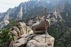 View in Kumgangsan National Park (Timon91) Tags: dprk north korea democratic peoples republic noordkorea noord nordkorea 조선민주주의인민공화국 kim juche chosun communism