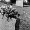 """Rain Check"" (Death By Sushi) Tags: cemetery mediumformat yashicad infraredfilm ilfordsfx squareformat"