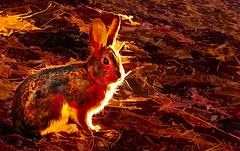 Molten Bunny-HSS! (Feeling Better...Still Slow To Comment!) Tags: sliderssunday topaz moltengold edit bunny