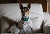 365-365 (Letua) Tags: 365project hanoi animal dog mascota perro pet portrait retrato
