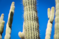 Desert Botanical Garden (davebentleyphotography) Tags: botanical garden dave bentley photography desert 2017 arizona canon catus travel desertbotanicalgarden desertbotanicalgardenphoenix botanicalgarden davebentleyphotography