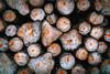 Wooden Wallpaper (Elowi) Tags: wood woods holz brown braun selp18105g dreams träume desktop wallpaper hintergrund sony sonyalpha alpha6000 alpha baum tree trees bäume baumstamm stamm tribe treetrunk
