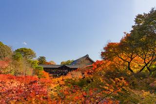 日本-京都-東福寺-楓葉(2017)