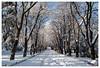 Parque de San Antonio. Ávila (Salva RC.) Tags: nieve parque nevada españa invierno paseo ávila san antonio ciudad beautiful ngc nationalgeographicgroup