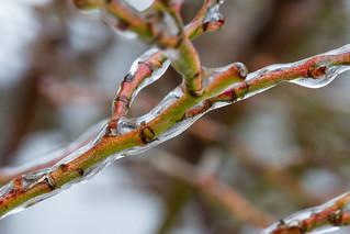 Ice sticks