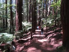 2017-110743 (bubbahop) Tags: 2017 rotorua newzealand redwood memorial grove hike