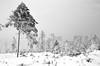 1979 - Winter in Ore Mountains (beranekp) Tags: czech krušné hory erzgebirge winter pramenáč tree