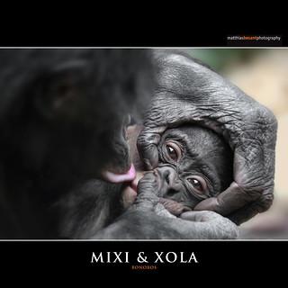 MIXI & XOLA