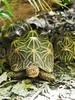 taronga dec 2017 - 0473 (bill doyle [mobile]) Tags: tarongazoo billdoyle australia newsouthwales taronga zoo nsw sydney reptile reptilehouse canberratripdec17jan18 australian
