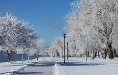 New Year's Frost (Elizabeth Almlie) Tags: southdakota pierre missouririver frost january snow trees lamppost trail path bench shore