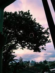 Bolhas 28.12.17 (Lemon Mousse!) Tags: arvore tree bubbles bolhas tons colors colours cores