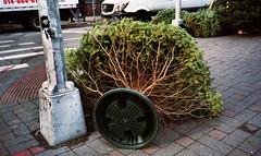 Christmas Trees (neilsonabeel) Tags: olympusxa2 olympus film analogue christmastree tree newyorkcity