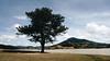 Standing alone (iSam's) Tags: standing alone tree lone đà lạt da lat viet nam isam samscheetah 2018 landscape nature