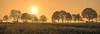 May (Jorden Esser (on a break)) Tags: 2017 may dawn field hss landscape orange sliderssunday sun sunrise trees