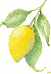 Lemon Branch ACEO 35 (Sonia Aguiar (Mallorca)) Tags: kitchen art landscape kitchenart lemonbranch watercolor watercolour aquarell aquarelle acuarela acuarelasdesonia aceo