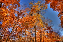 Fall Colors (Anton Shomali - Thank you for over 1 million views) Tags: fall colors fallcolors sky tree trees yellow red blue orange gold