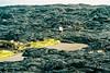 Lava field from the Kīlauea volcano, The Big Island, Hawaii キラウエア火山の溶岩原、ハワイ島、ハワイ州 (Mr Mikage (ミスター御影)) Tags: 2005 countryusa countryusahawaii naturevolcano transportsignage