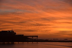 Golden sunset and starlings over Aberystwyth pier (karen leah) Tags: sunset twilight dusk december aberystwyth ceredigion outdoors nature colour spectacle winter atmospheric magical golden starlings dramatic sea