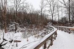 The Cottony Bridge (Haytham M.) Tags: canada ontario outdoor nature trees fluffy storm snow coldday stroll walk bridge