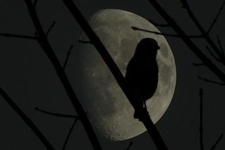 beeping at the moon