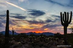 Sunset in the Sonoran Desert (doveoggi) Tags: 8215 arizona scottsdale mcdowellsonoranpreserve desert sunset sonorandesert landscape saguaros