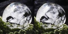 Frosty Fern (Don Komarechka) Tags: freezing soap bubble frozen ice crystal fractal orb sphere winter plant glowing backlit 3d stereo stereoview crossview stereoscopy stereoscope stereoscopic
