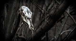 Death in the Dark Forest