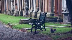 Dean Village - The Cemetery (Elisabeth Redlig) Tags: elisabethredlig scotland uk edinburgh newyear cemetery graves graveyard deanvillage bench winter squirrel