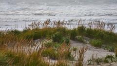 wAVES oF rEMINISCENCE 3 (wNG555) Tags: 2014 oregon seaside beach pacificcoast fav25