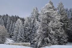 Chez Larze (bulbocode909) Tags: valais suisse montchemin montagnes nature arbres forêts givre neige automne brume chezlarze chemindessus