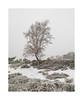 Almost Black and White (jos.pannekoek) Tags: kalmthout heide belgie natuur landscape landschap 1755 nikkor1755f28 d500 winter sneeuw